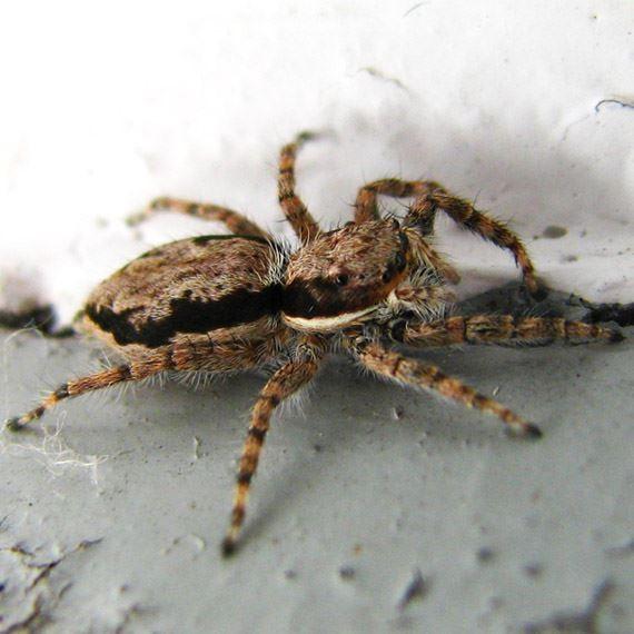 Bug Man Pest Control